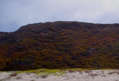 Dunes covered with non-native ice plants.  Credit: Dave Hubbard